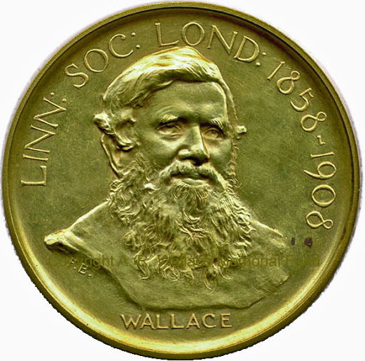 Darwin-Wallace medal of the Linnean Society of London (Wallace side). Copyright A. R. Wallace Memorial Fund.