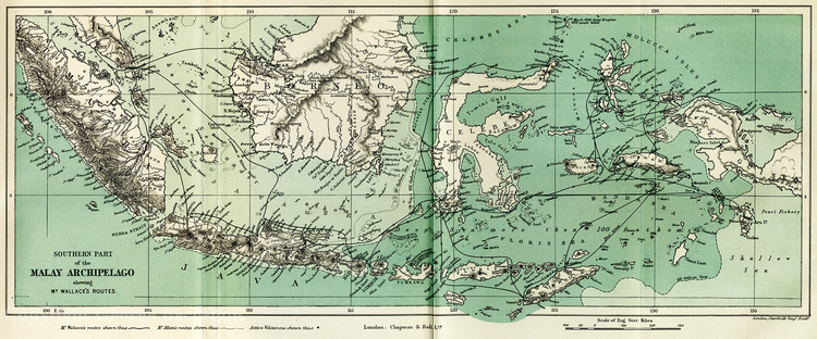Route of Alfred Russel Wallace's journey (heavy black line) around the Malay Archipelago, from his book 'The Malay Archipelago'. Copyright George Beccaloni